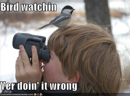 funny-pictures-bird-on-birdwatcher-head.jpg